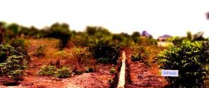 Residential Land Land for sale Okun Oje Villa Alatise Ibeju-Lekki Lagos