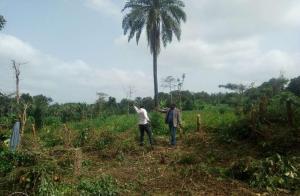 Land for sale Akinyele, Oyo, Oyo Akinyele Oyo